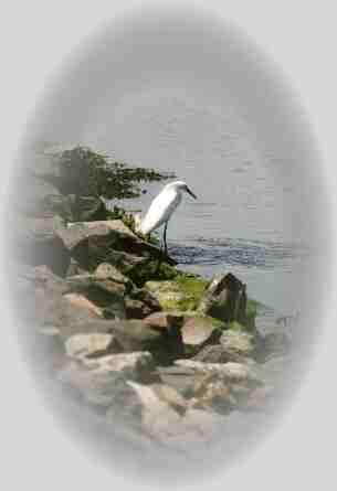 Burton's Island