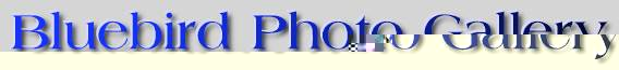 BLUEBIRD PHOTO GALLERY LOGO