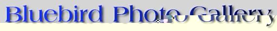 BLUEBIRD PHOTO GALLERY LOGO
