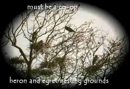 Co Op Tree